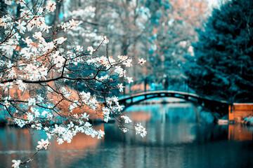 Obraz Park z magnoliami i mosteczkami - fototapety do salonu