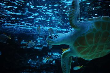a sea turtle in an aquarium