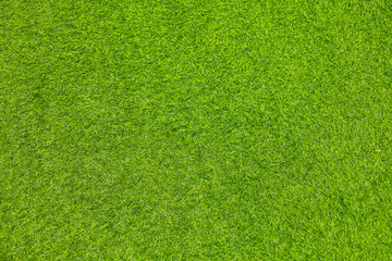 Fototapeta Green artificial grass nature use for background