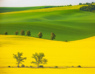 landscape with trees and rape seed crop