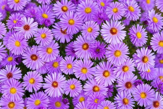 Decorative purple flowers