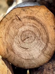 Close up of textured tree logs in a cut.