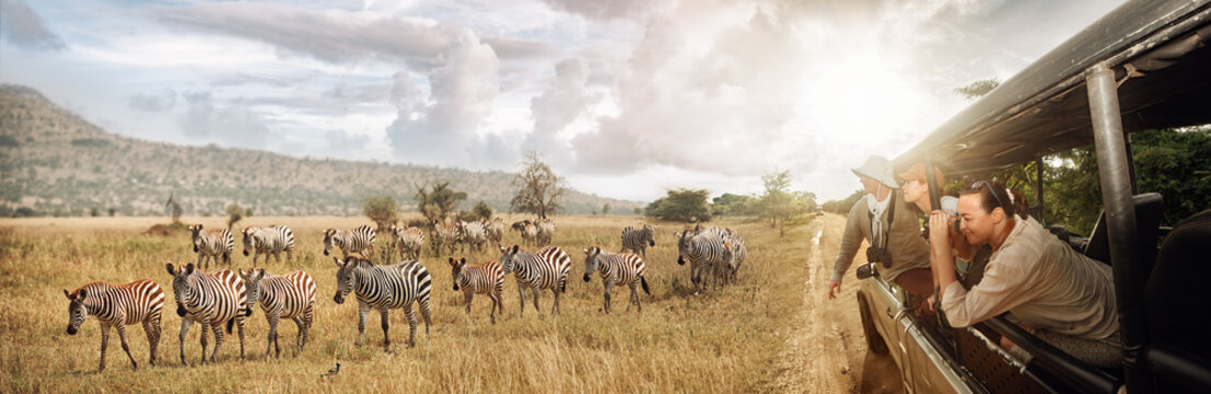 Group of young people watch and photograph wild zebras on safari tour in national park on Tanzania.