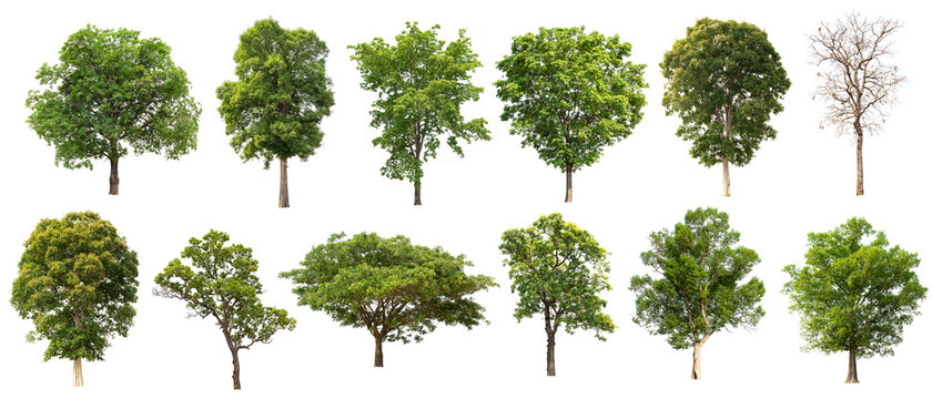 tree collectoin isolate on white background