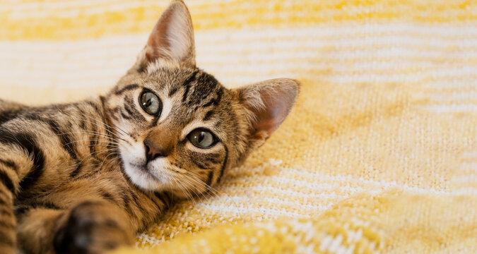 Little kitten lying on a yellow blanket