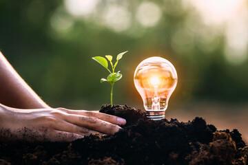 Fototapeta energy concept. eco power. lightbulb with small tree growing on soil