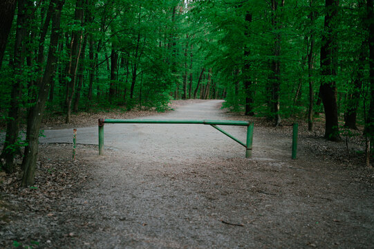 Closed forest path with green ramp deep in woodland