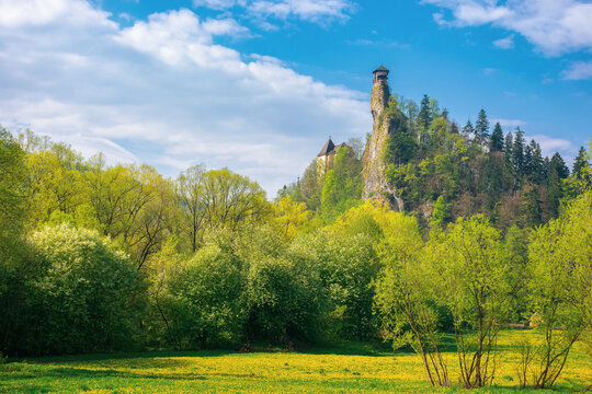 oravsky podzamok, slovakia - MAY 01, 2019: castle tower on the rock. beautiful sunny landscape in springtime. trees in green foliage on the meadow beneath a sky with clouds. popular travel destination