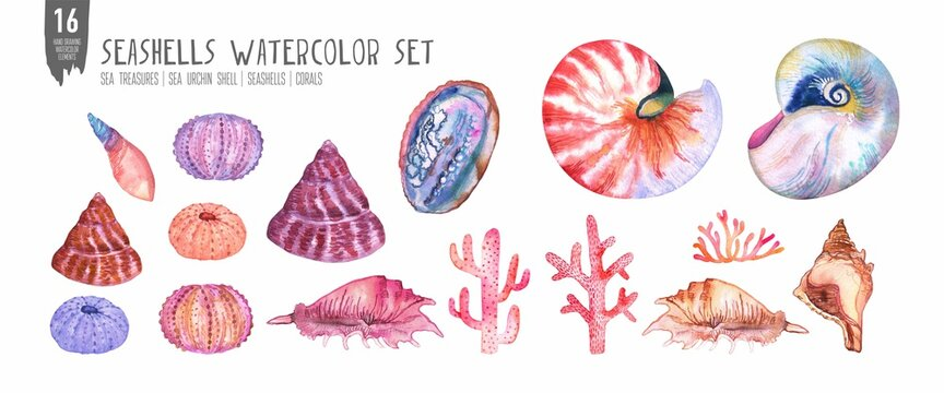 Watercolor seashells, coral and sea urchin set. Colorfull set for design textile, wallpapers, prints and banners.