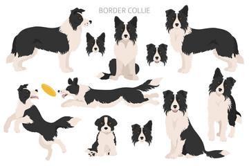 Fototapeta Border collie clipart. Different poses, coat colors set obraz