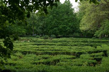 dzrewa natura zieleń wiosna rośliny park