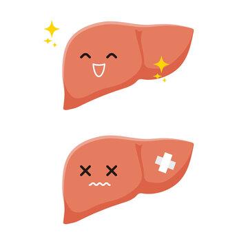肝臓の元気と疲労