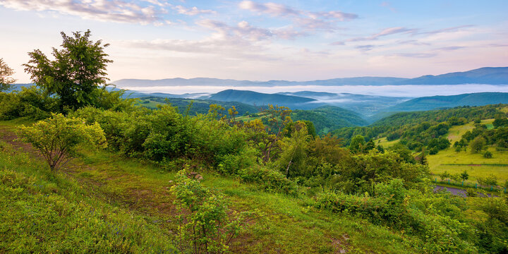mountainous rural landscape at sunrise in summer. fog in the distant valley. green plants and trees on the hill. beautiful nature scenery with clouds on the sky