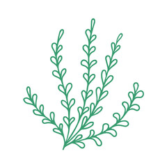 Fototapeta Graceful green twig. Contour leaves. Vector isolated element. Garden plant.