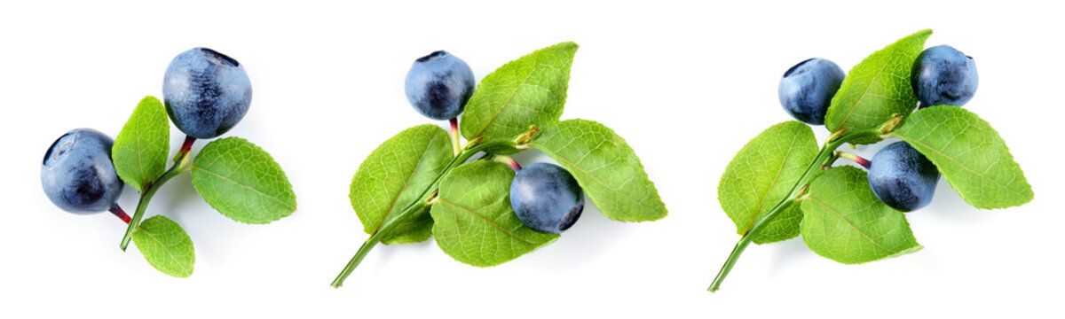 Bilberry isolated. Bilberry on white. Bilberries with leaf on branch. Top view set on white background