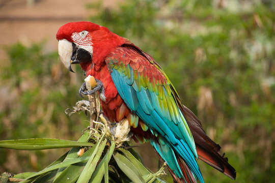red-blue parrot sitting on palm leaves