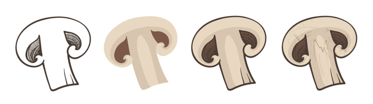 Sliced champignon, four variants of vector illustration. Linear and color sketches. Isolated mushrooms on a white background. EPS 10. Vegan food.