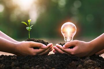 hand holding young plant and ligh bulb. concept saving energy. eco earth day