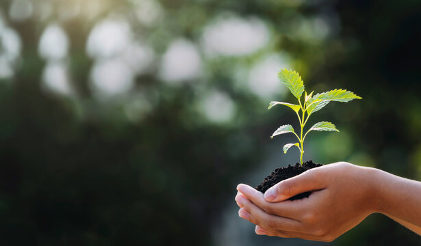 hand holding young plant with sunlight on green nature background. concept eco earth day
