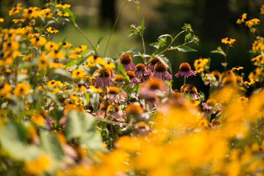 late summer flowers in deep yoke-yellow colour palette