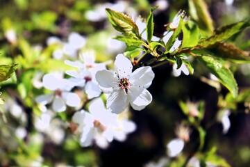 wiosenny biały kwiatek