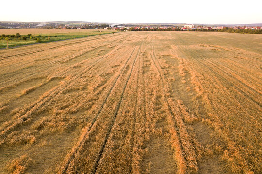 Aerial view of ripe farm field ready for harvesting with fallen down broken by wind wheat heads. Damaged crops and agriculture failure concept.