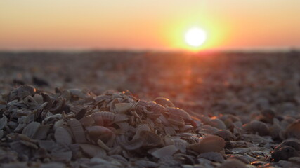 Sunrise on the background of seashells by the sea