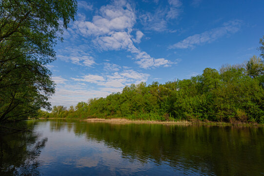 Deciduous forest on the bank and deep river Psel in the morning, landscape in the countryside.