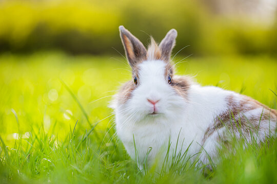 Cute bunny in the green meadow in nature. Spring landscape with grass and sun.