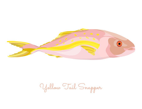 Yellow Tail Snapper in flat style isolated
