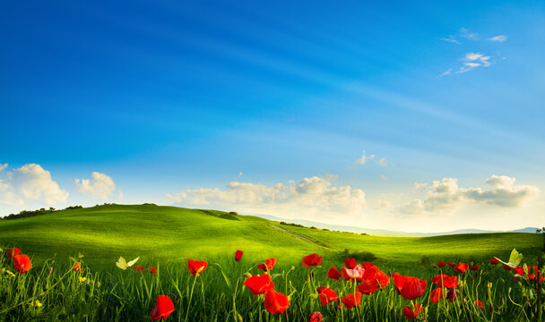 spring landscape panorama with flowering flowers on field and blue sky