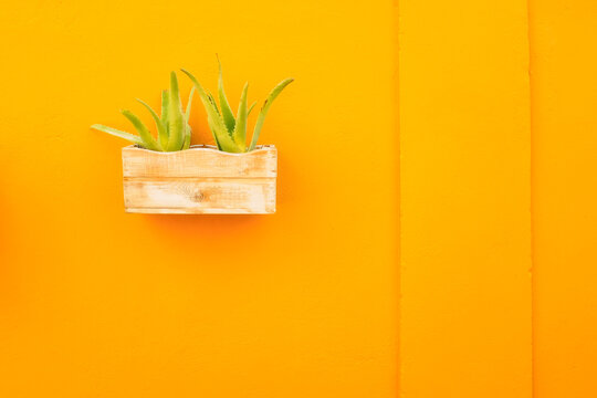 Aloe vera plant in a wooden pot hanging on a yellow wall