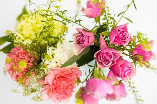バラの花 Beautiful rose flower just bloomed