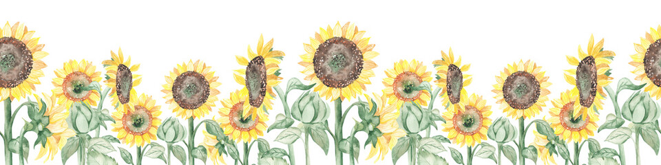 Fototapeta Watercolor seamless border with blooming flowers sunflowers on stems and buds