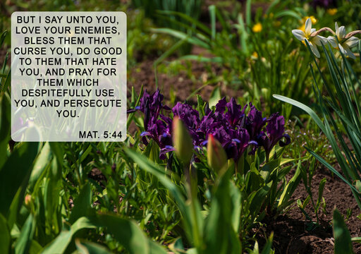Bible quotes on blurred blooming flowers background. Card for believers.Inspirational verse praying. Christian wallpaper.But I say Love your enemies bless them that curse you do good to them that hate