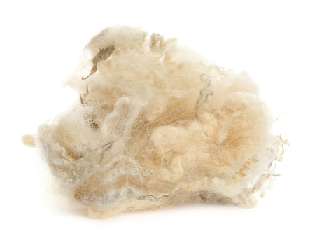 Heap of raw wool isolated on white