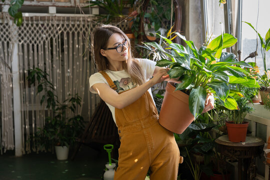 Plant care and gardening hobby. Young woman with flower pot in jumpsuit in home garden after work. Stress relief for businesswoman, entrepreneur or freelancer. Florist or gardener in indoor greenhouse