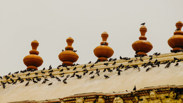 Flock of birds on a rooftop at Indian temple
