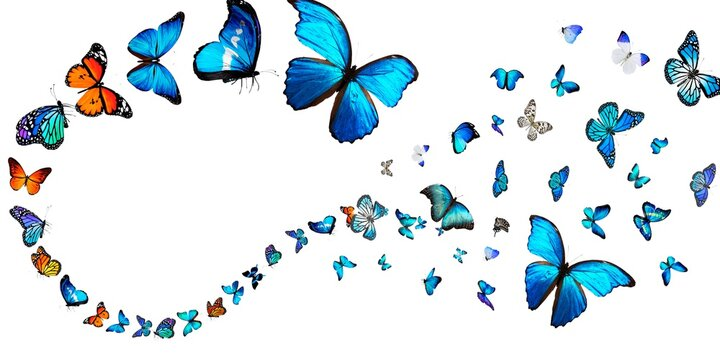 Butterfly Stock Image White Background