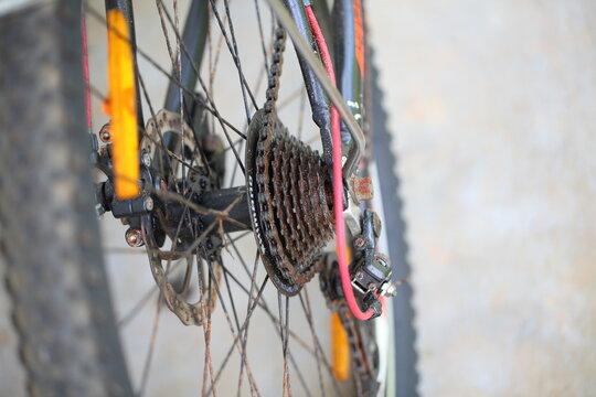 sri lanka,road bike in a tropical garden