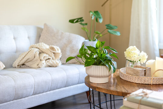Potted plant on the table in a stylish living space