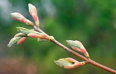Obraz Kwiaty, drzewo, zielony, wiosna - fototapety do salonu