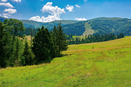 countryside summer landscape on a sunny day. grassy fields and forested hills at the foot of mountain ridge beneath a blue sky with fluffy clouds