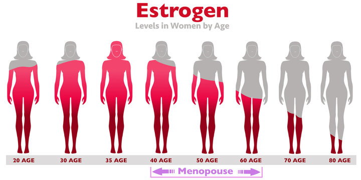 Estrogen Levels. rates in the body of women with age. High ,low  proportion. Gray silhouette female, red occupancy rate. Growth, aging, sexual health, libido ratio. Age 20, 30, 40. Illustration vector