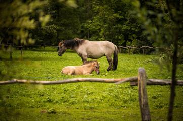 Konie - fototapety na wymiar