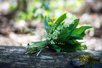 closeup of lily of the valley bouquet on tree trunk in the forest