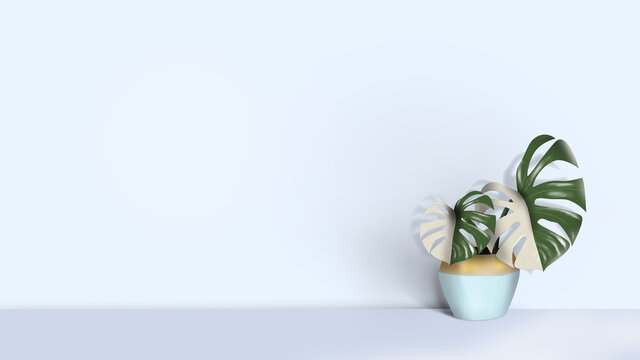 Decorative monstera tree planted in white ceramic pot isolated on white background. Withe and green color leaf. Two color plant. Light blue interior.