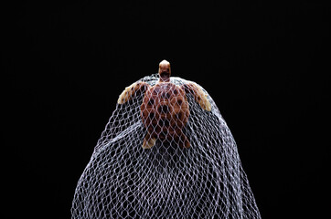 A turtle toy model trapped in white net on black background. Minimal world ocean day concept.
