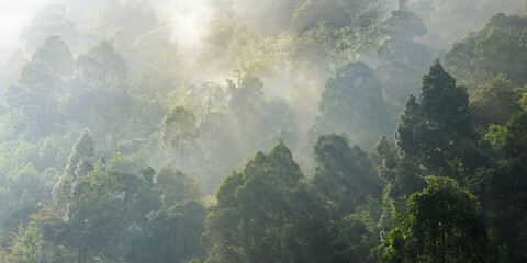 morning mist on the canopy in the rainforest