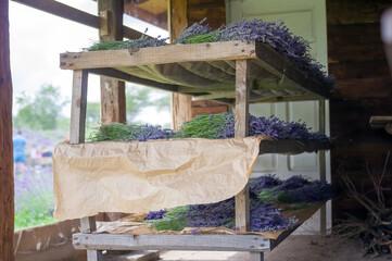 Obraz Lawenda bukieciki proces suszenia - fototapety do salonu